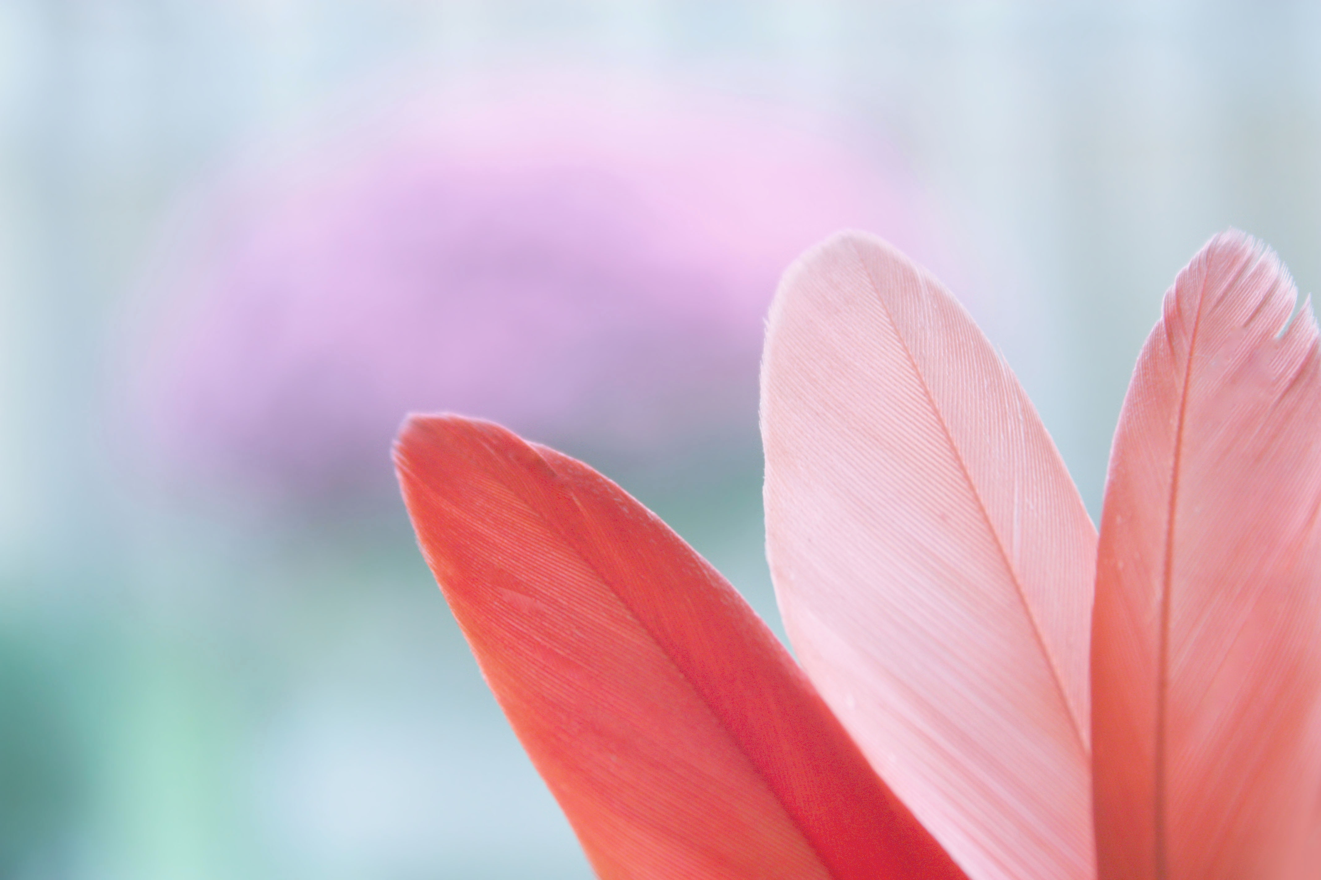 Feather background by Lakeisha Bennett